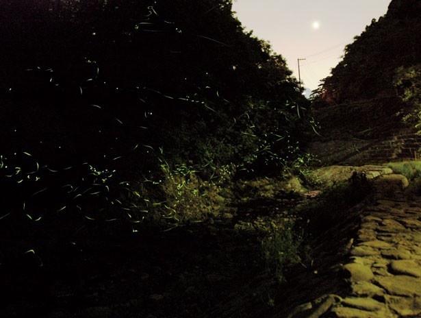 真っ暗闇をゆらゆら光りながら飛ぶホタルが、淡路島に夏の訪れを告げる。ダム上流のホタル橋周辺は足場が悪いので歩きやすい靴で行こう/諭鶴羽ダム