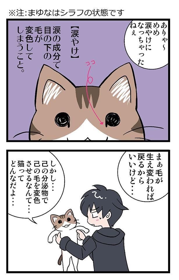 初猫物語_008_左1