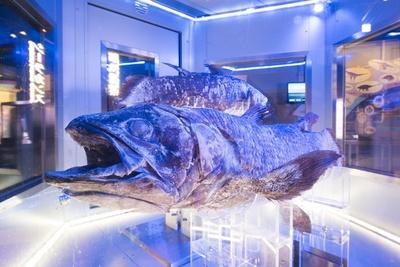 「沼津港深海水族館 シーラカンス・ミュージアム」の情報もばっちり掲載