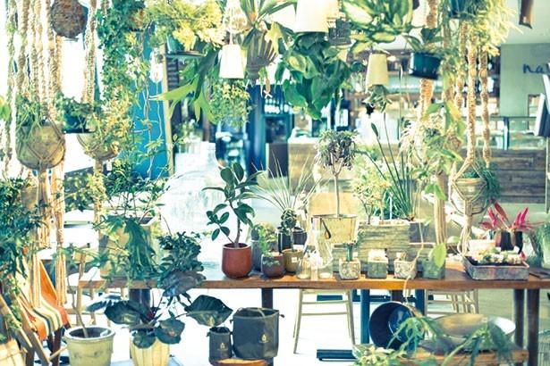 吊るして楽しむスカイプランターなど、おしゃれで育てやすい植物も販売/niko and...COFFEE