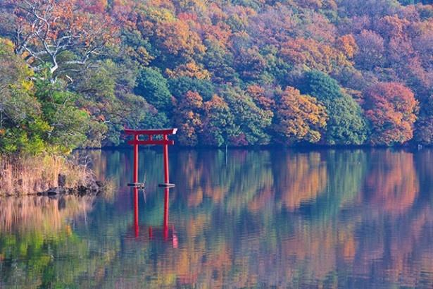 「伊豆の瞳」と呼ばれ、ひょうたん形をした周囲4 kmの静かな湖「一碧湖」