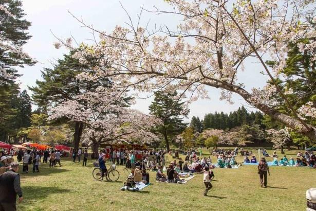 過去の北斗陣屋桜まつりのようす。おでん、そば、うどんなどの出店も