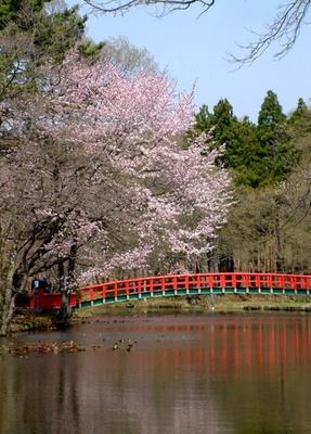 八郎沼公園。花見ドライブに行ったら寄りたい、北斗市のおすすめスポットは……