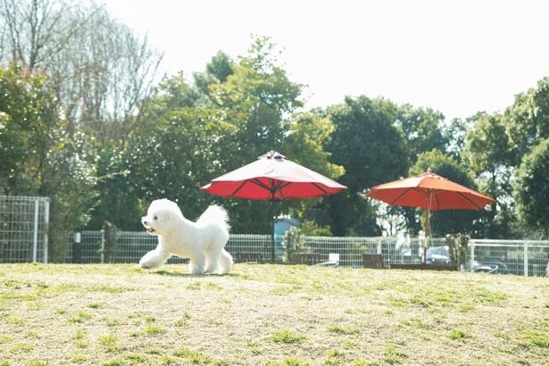 屋外のドッグランは太陽を浴びて快適!