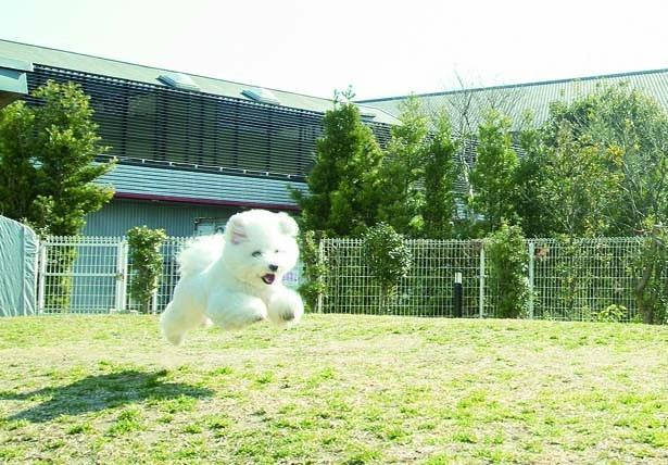 芝生に出たらテンションMAXに!見ごとな走りっぷりを見せてくれました