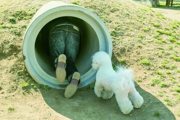 飼い主さんに続いてトンネルに入るぞ~♪