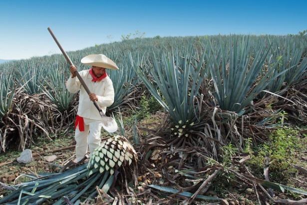 テキーラは、ブルーアガベを100%使用した正統派「Sauza(サウザ)」を使用