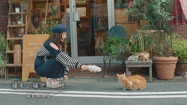 猫と戯れる一幕も