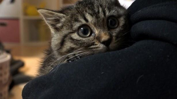 4月2日の「ザ・ドキュメンタリー」で猫特集
