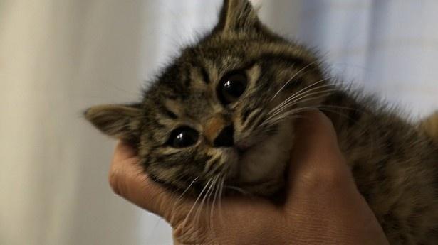 【写真を見る】猫ブームの裏側をカメラが追う