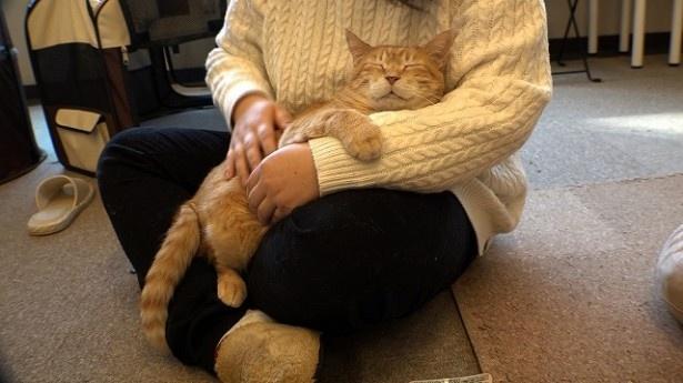 保護された猫達は、どんどん安心した表情へと変わっていく