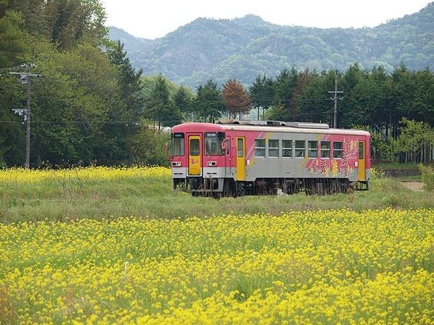 北条鉄道花の花畑などや田んぼの間を走るので心もホッコリ