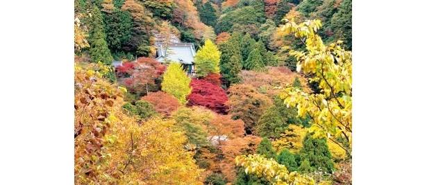 木立の間から見る阿夫利神社