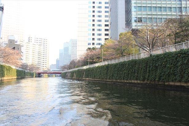 目黒川沿いの桜並木は都内でも有名な桜スポット