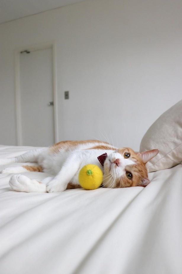 ベッドの上でのんびりごろ~ん