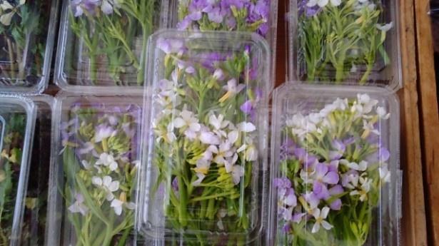 【写真を見る】淡い紫色がかわいらしい花大根