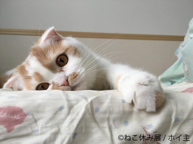 巡回展とは思えないスター猫の新作展示盛りだくさん!