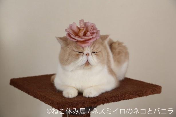 ふふっと笑える癒しの猫写真も満載です