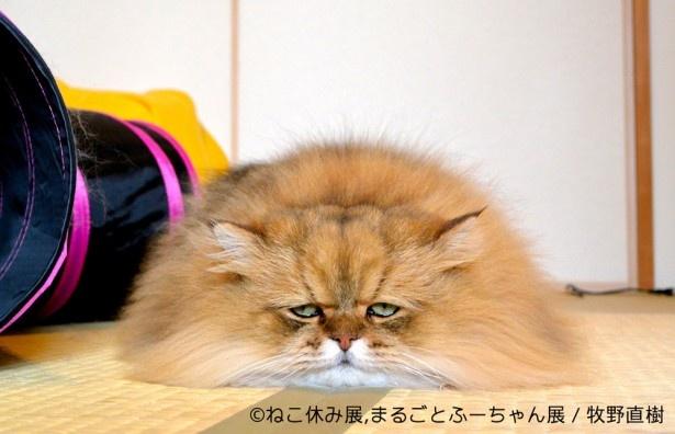 猫に見えないこのフォルム!
