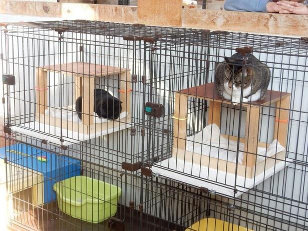 旭山動物園・「こども牧場」のネコ
