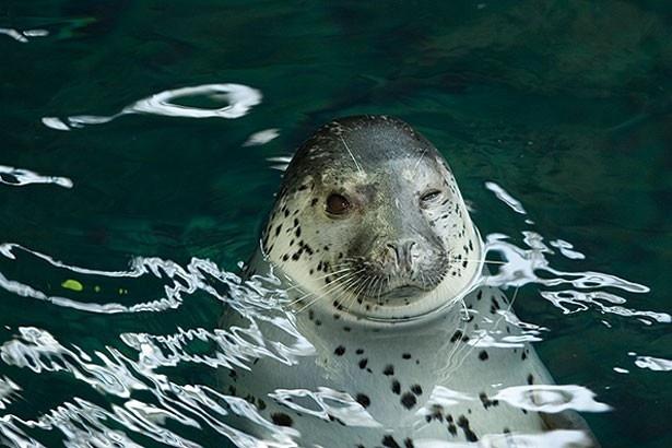 ゴマフアザラシやカリフォルニアアシカと、かわいい生き物が仲良く暮らす/モンタレー湾