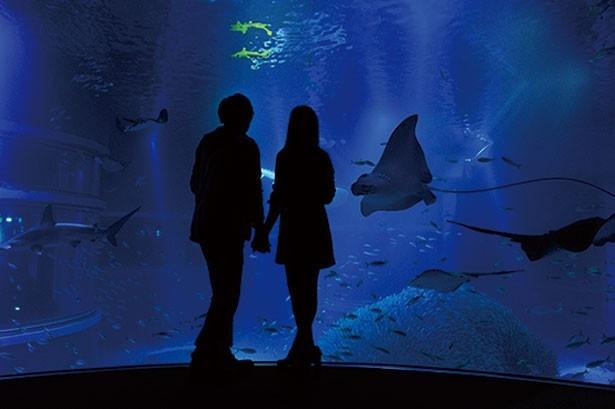 生き物の夜ならではの動きを見られることも。幻想的な雰囲気はデートにも◎
