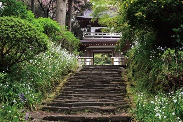 【写真を見る】浄智寺のシャガ