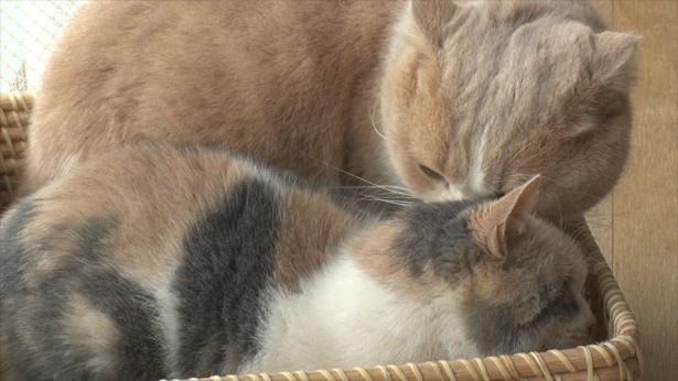 かごの中でも一緒のシナモン(写真上)とドロップ(写真下)