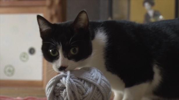 毛糸を使って遊ぶの好きなひげ