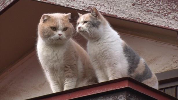 屋根の上でも一緒にいるシナモンとドロップ(写真左から)