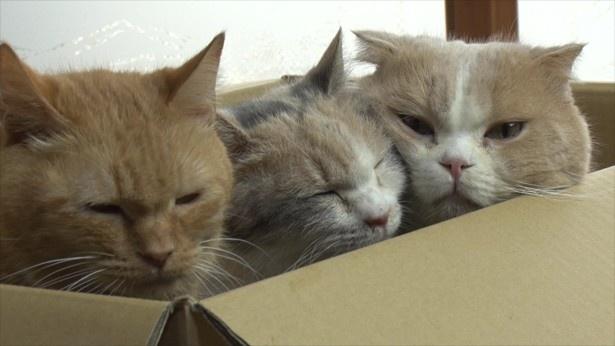 ネコはやっぱり箱の中が大好き?