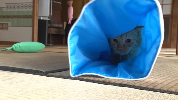 ネコはやっぱり狭い所が好き?