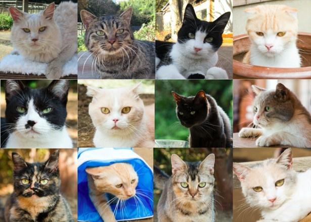 映画「ねこあつめの家」に出演するネコたち