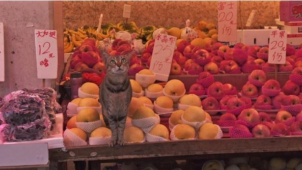 初回の舞台である「香港」の青果店でくつろぐネコ