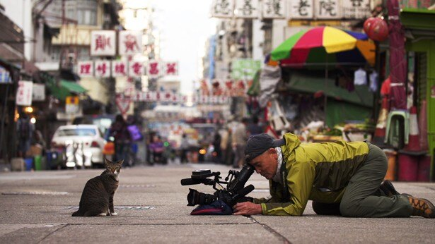 【写真を見る】ネコに向き合いながら、撮影を行う動物写真家・岩合光昭