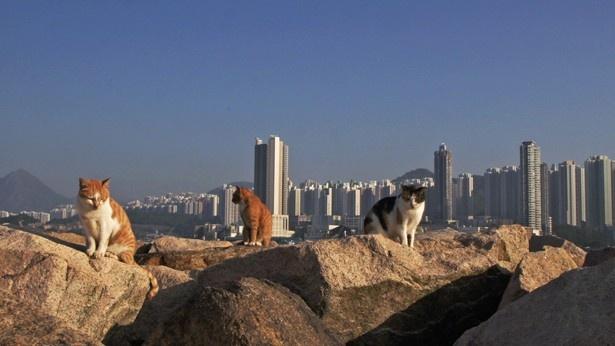 海辺でくつろぐネコたち