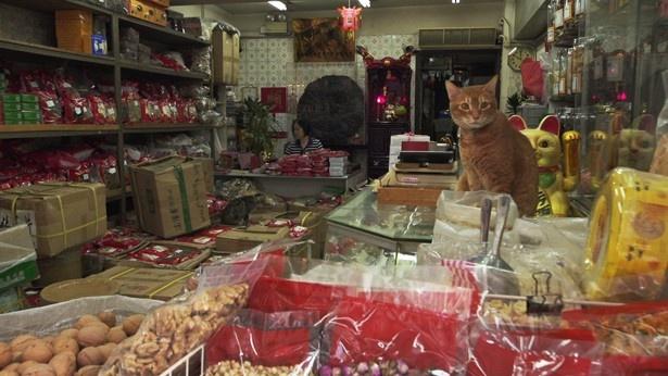 「お店でもくつろいじゃうよ~」と人懐っこいネコ