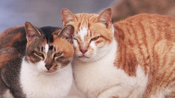 仲良しネコたちがまったりとくつろぐ