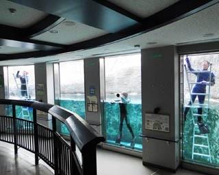 旭山動物園・「ほっきょくぐま館」のプールで泳ぐホッキョクグマ