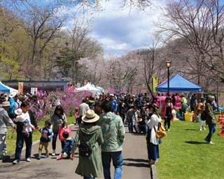 満開の桜とツツジが見どころ 他にもおすすめのつつじまつりが…
