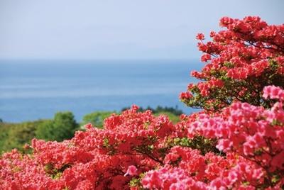 山麓一帯に咲き誇る約60万本のツツジ