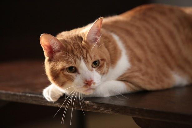 映画「猫忍」で役者デビューした金時