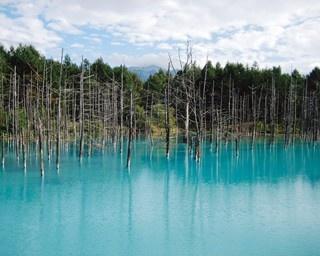 真っ青な水面が広がる池は、まるで絵の具を溶かし込んだかのよう「青い池」