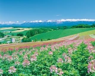 三愛の丘 展望公園/散策しながらパノラマロードを眺めよう! まだまだ「美瑛の丘」紹介していきますよー