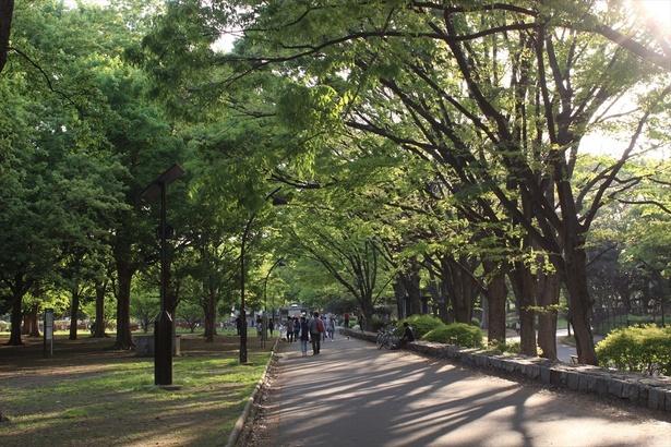 会場のある駒沢公園は緑豊かな広々とした運動公園だ