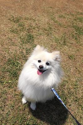 """【写真を見る】茨城出身の記者の愛犬""""福丸くん""""がレポート"""
