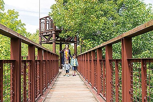 森の上を渡る全長約300mの通路で空中散歩が楽しめる森の空中散策路「ソラード」/万博記念公園