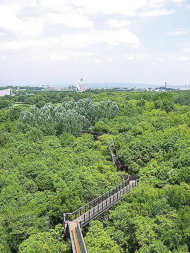高さ約19mのソラードの展望タワーからの景色。森はもちろん大パノラマな園内全体の景色が楽しめる/万博記念公園