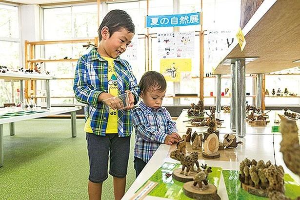 万博記念公園に生息する野鳥や昆虫、植物などをわかりやすく紹介する/自然観察学習館
