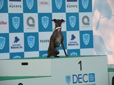祝!ギネスに申請された犬、アイちゃんの雄姿